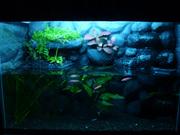 Объемный аквариумный фон