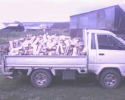 Продам дрова березы,  колотые.