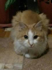 Рыжий котик ищет теплый дом!